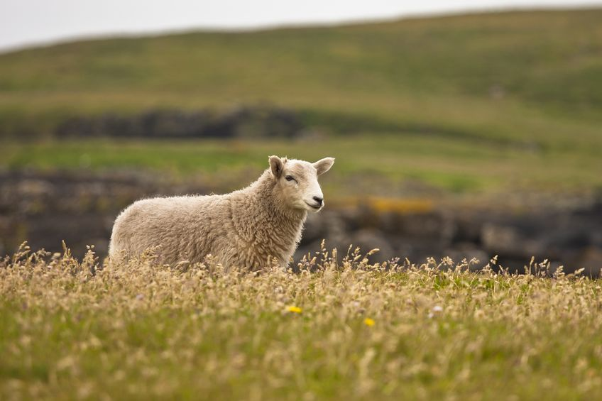 SNP budget 'kick in the teeth' for rural communities