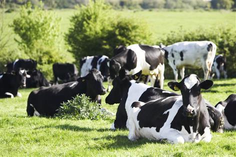 Dale Farm ups its milk price to over 27p per litre