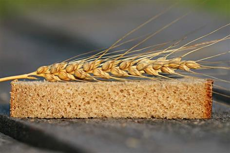Can we produce a better wheat crop to feed the world?: Scientists uncover hidden wheat treasures