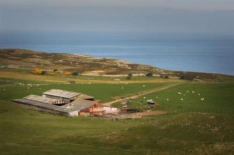 Sheep to be reintroduced on the '£1 a year rent' farm
