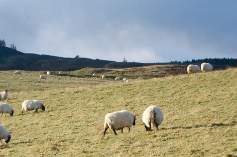 Farmers in Northern Ireland to receive ANC scheme money in March