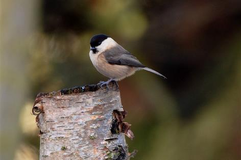 Landowners and farmers help to extend protection for mid Cornwall's wildlife-rich landscape