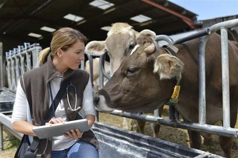 General election: British vet lobbying secures wins for animal health and welfare