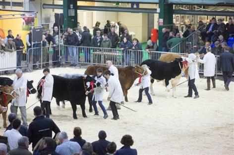'Big blow': TB restrictions could hit English Winter Fair entries