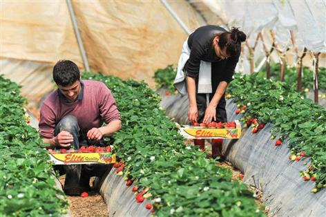 Committee urges creation of new Seasonal Agricultural Workers Scheme