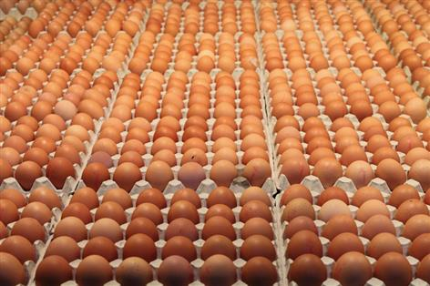 Numerous parties look at taking over failed egg business Blackdown Hills