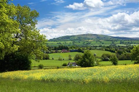 'Robust performance' of agricultural land despite Brexit uncertainty