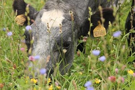 'Pasture for Pollinators': Welsh dairy farmers help reverse bee decline