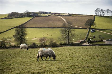 Brexit: Defra prepared to offer financial support to sheep sector