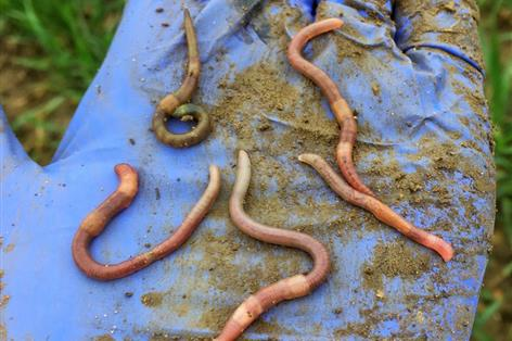 Farmers help reverse decline in key earthworm types
