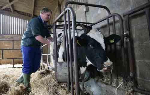 Bluetongue - GB disease control strategy