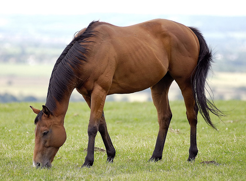 Horse meat in food - limits of detection