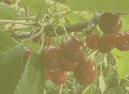 Basic horticultural statistics