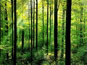 Forestry & Timber: Growing a Resilient S...