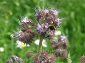 Are pesticide risk assessments for honey...