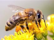 Bee Safe - Bee Careful