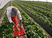 Agricultural Workforce in the UK