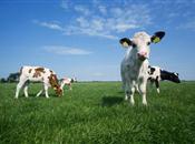 FUW Report into the Post-Quota Dairy Sec...