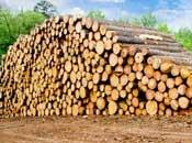 Sawlog prices declined in many countries...