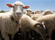 NSA Sheep 2014 Official Event Guide