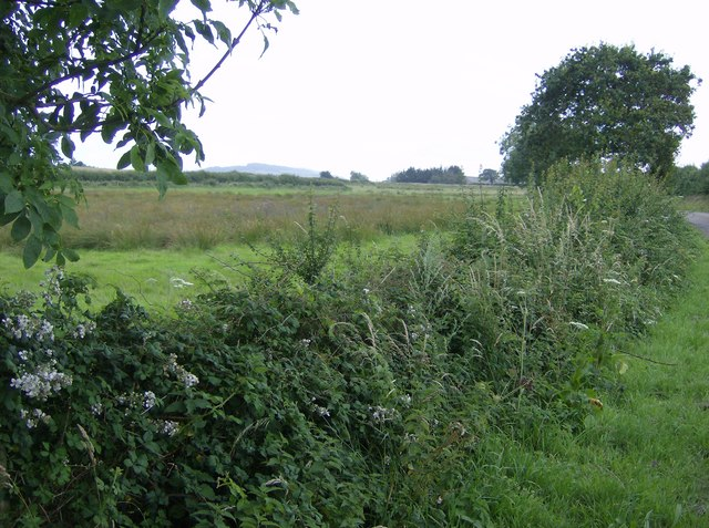 The benefits of hedgerows and trees for agriculture