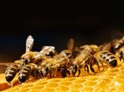 EFSA assesses risks to bees from fiproni...
