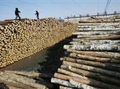 Total number of imported lumber to China falls