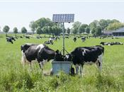 Effects of Solar Farms on Local Biodiversity