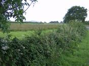 The benefits of hedgerows and trees for agricultur...