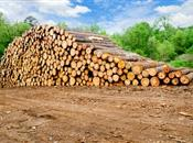 Price discrepancy between hardwood and softwood ch...
