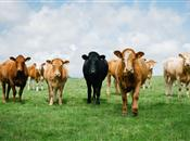 Going for Growth: Northern Ireland agri-food indus...