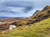 The complementary role of sheep in upland and hill...