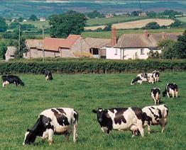 Rydon Farm