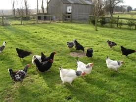 Uplees Farm_1