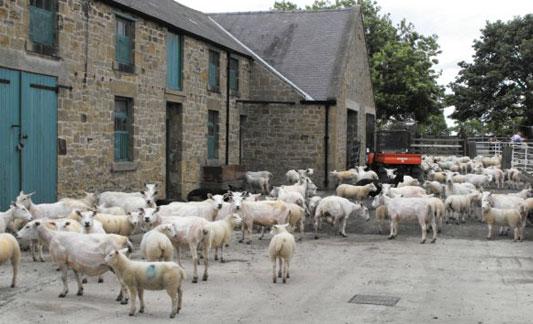 Eland Green Farm