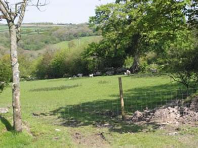 Fyfett Farm_1