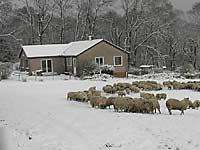 Shantron Farm