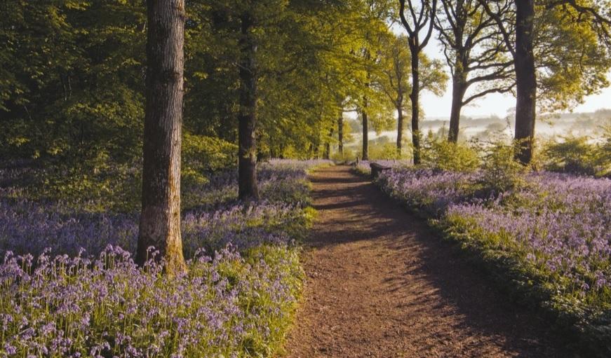 Arlington Bluebell Walk