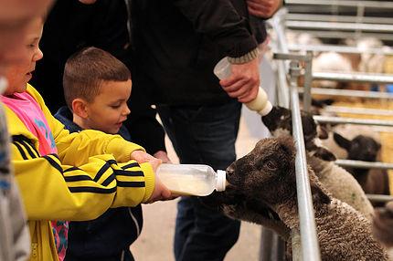 Big Sheep & Little Cow Farm