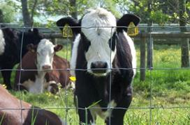 The Cattle Country Park