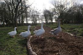 South Angle Farm Park