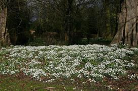 Elsham Gardens & Country Park