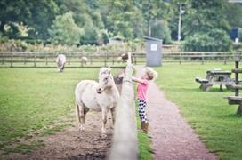 Cefn Malby Farm Park
