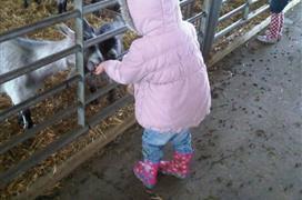 Playdale Farm Park