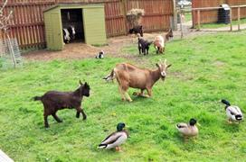 Whisby Animal Park