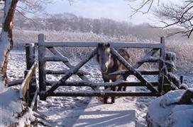 Donkey Park