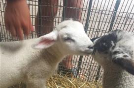 Animal Quackers Park Farm