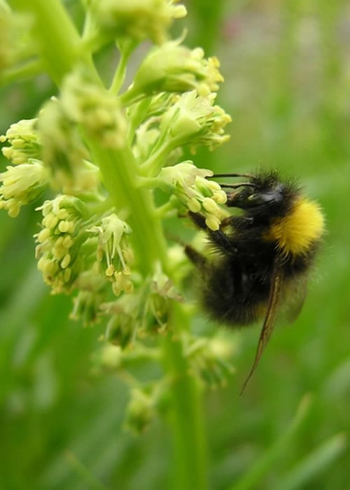 Banning insecticides will not save British bees
