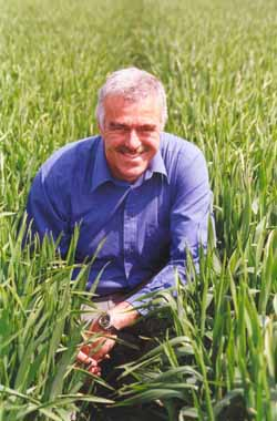 New wheat takes the biscuit