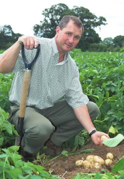 Big crop activity prevents potato harvest delays